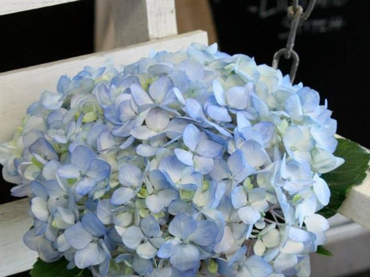 Tmx 1380133662409 Vintage18 Greensboro, North Carolina wedding florist