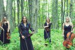 Divina Strings llc image