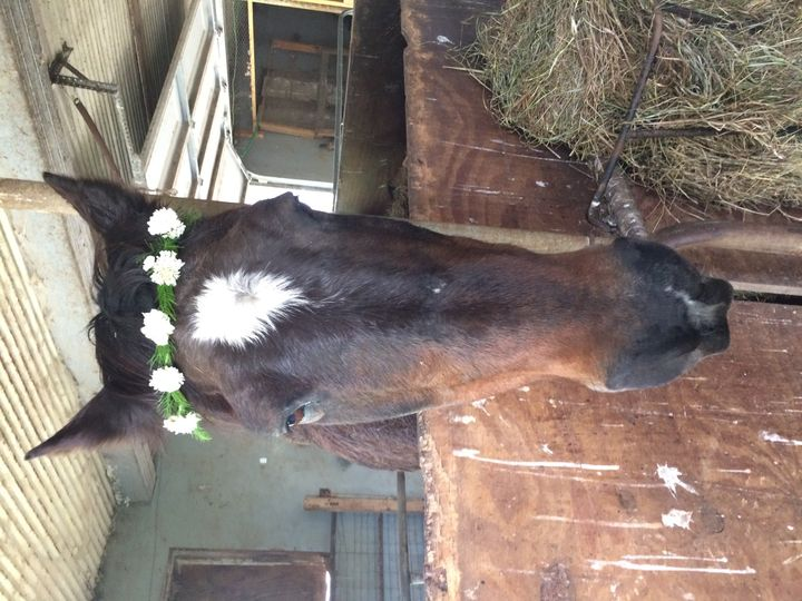 Flower crown on a horse