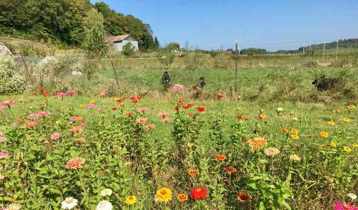 Flower Power VT Farm