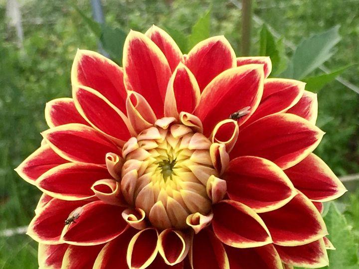 Tmx 1510187710075 Img8393 Ferrisburgh wedding florist