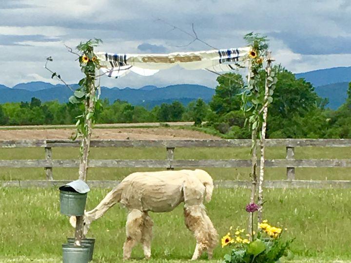 Tmx 1510261296488 Img7275 Ferrisburgh wedding florist