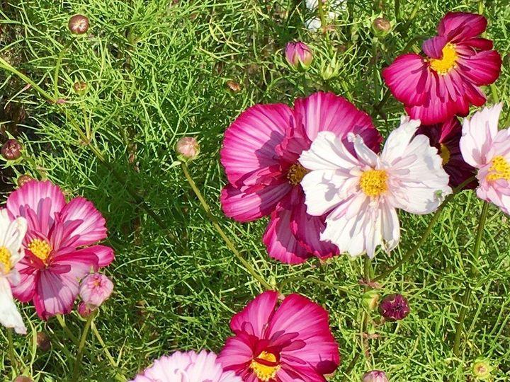 Tmx 1510262729281 Img9912 Ferrisburgh wedding florist