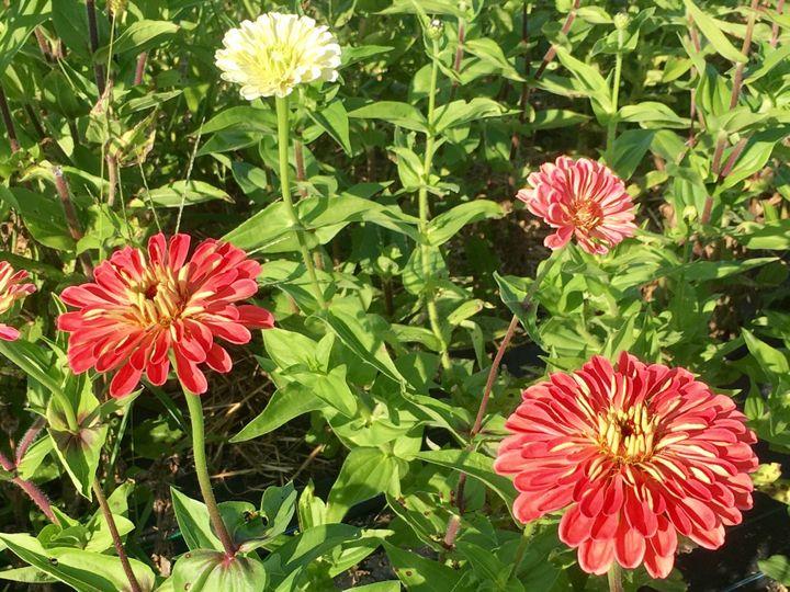 Tmx 1510262821158 Img9343 Ferrisburgh wedding florist