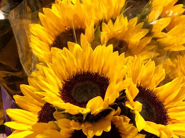 Tmx 1510360113897 Img0189 Ferrisburgh wedding florist