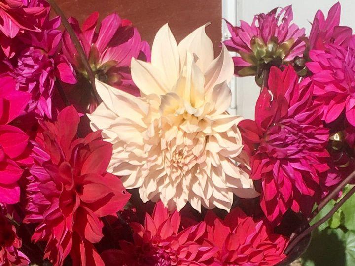 Tmx 1510360650966 Img9815 Ferrisburgh wedding florist