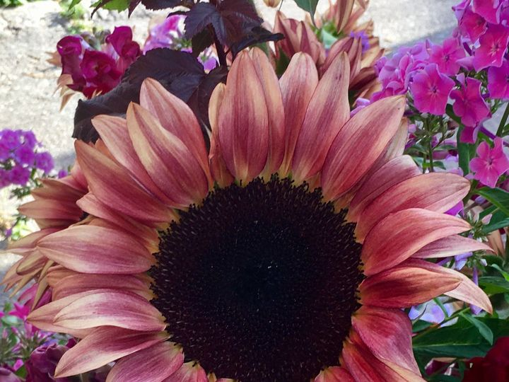 Tmx 1510360821557 Img8480 Ferrisburgh wedding florist