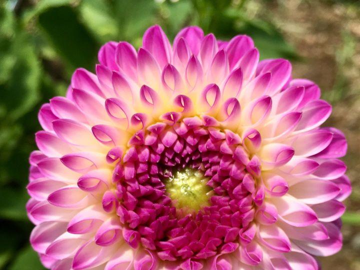 Tmx 1510360978507 Img8151 Ferrisburgh wedding florist