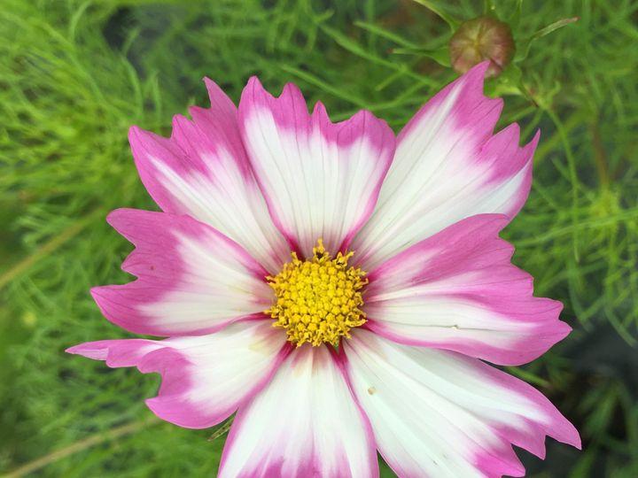 Tmx 1510361507718 Img8766 Ferrisburgh wedding florist