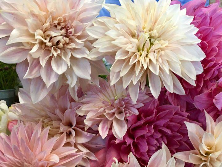 Tmx 1511013593 2d269e7e9a9b4815 1510261017130 Img0088 Ferrisburgh wedding florist