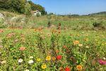 Flower Power VT Farm image