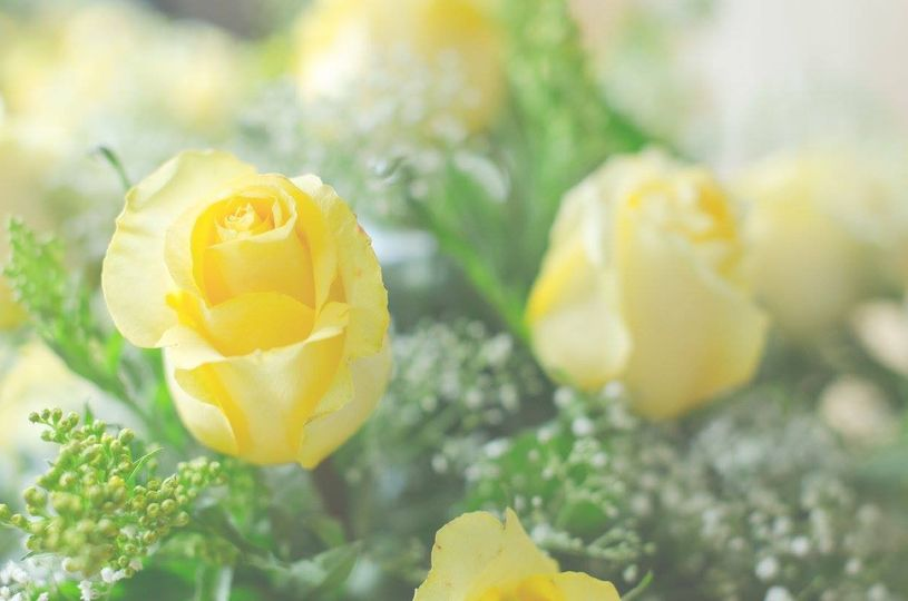 yellowroses