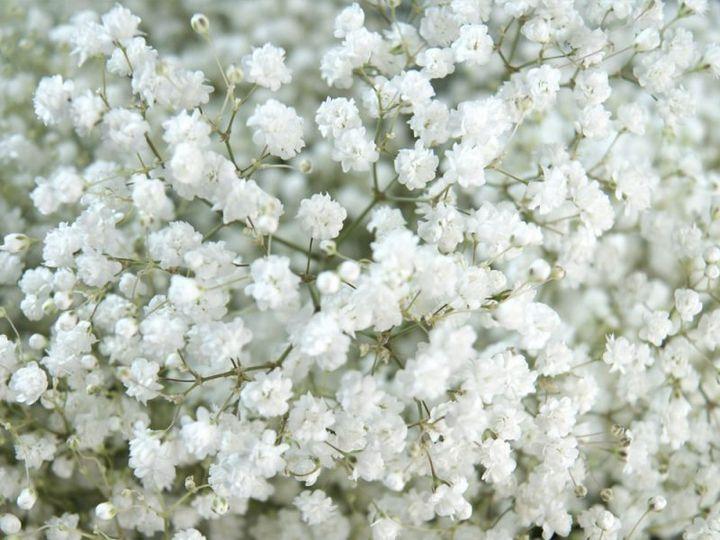 Tmx Babys Breath Bulks Wholesale Xcelence1 800x800 51 932572 Fort Lauderdale, FL wedding florist