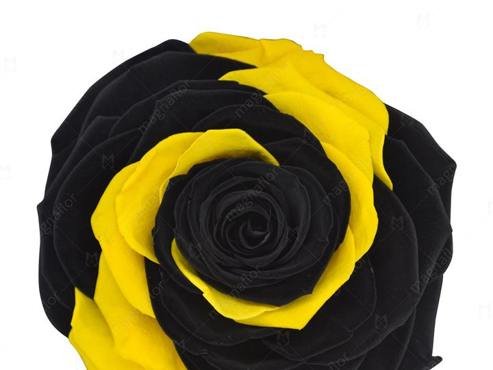 Tmx Black And Yellow 51 932572 Fort Lauderdale, FL wedding florist