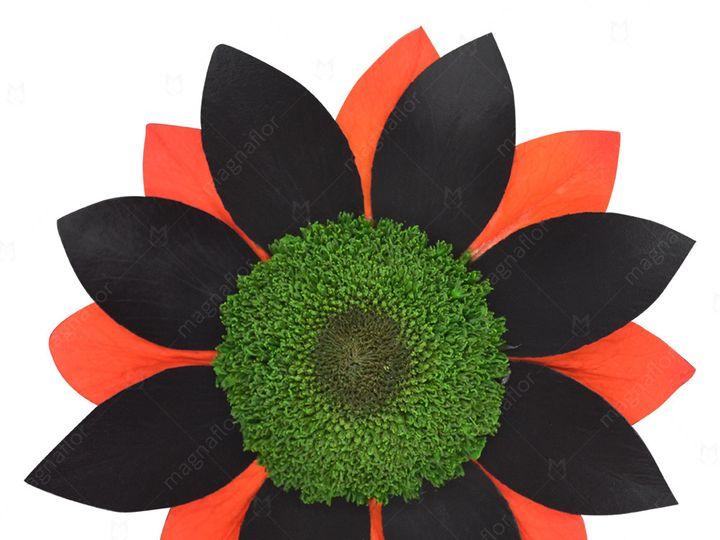 Tmx Black Orange Sunflower 51 932572 Fort Lauderdale, FL wedding florist