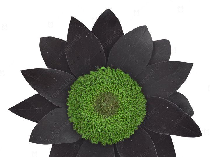 Tmx Black Sunflower 51 932572 Fort Lauderdale, FL wedding florist