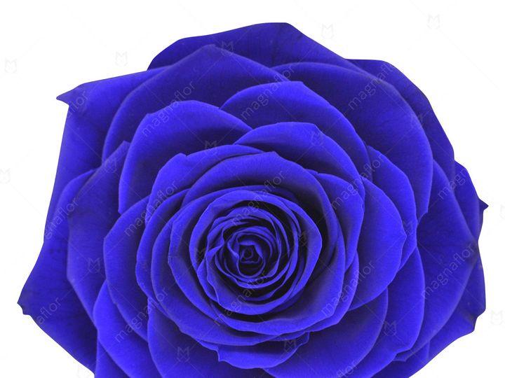 Tmx Blue Perfection 51 932572 Fort Lauderdale, FL wedding florist