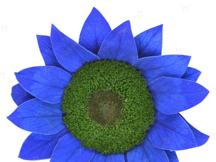 Tmx Blue Sunflower 51 932572 Fort Lauderdale, FL wedding florist