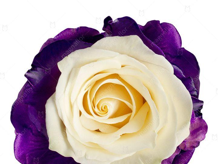Tmx Comet Rose 1 51 932572 Fort Lauderdale, FL wedding florist