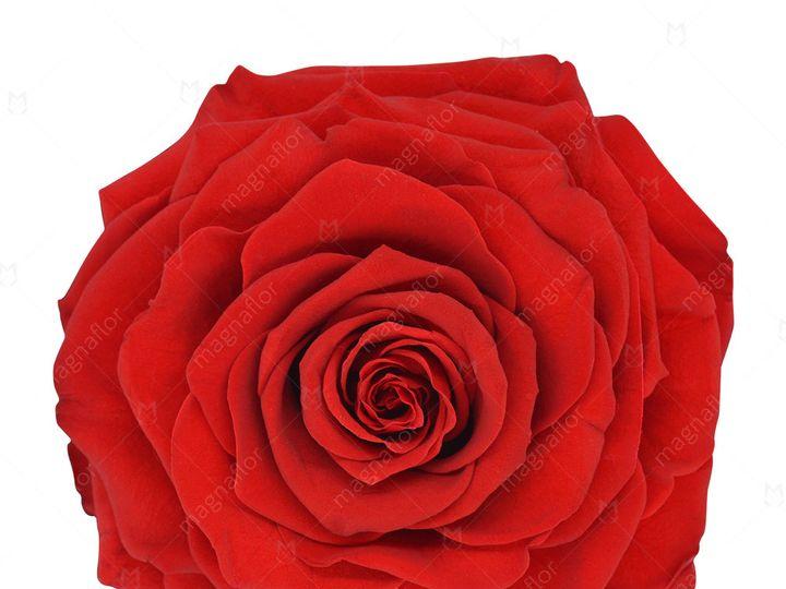 Tmx Dark Red Perfection 51 932572 Fort Lauderdale, FL wedding florist