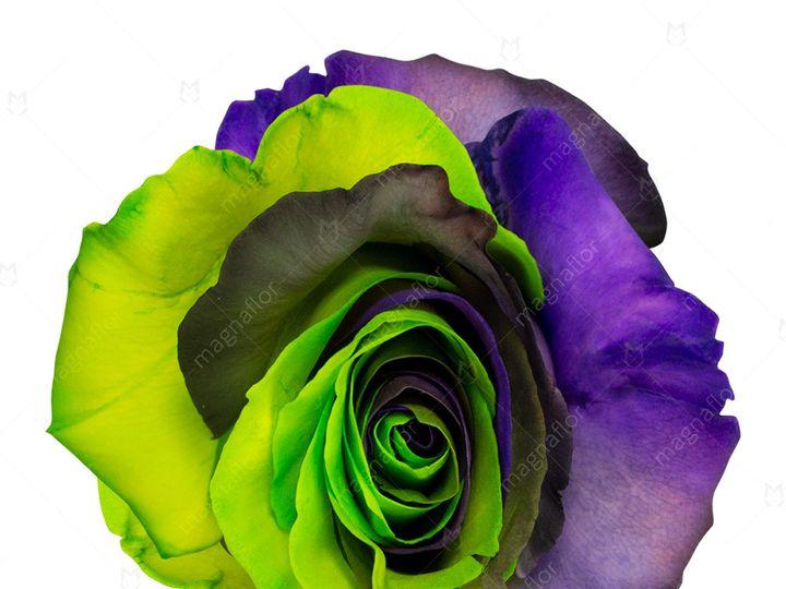 Tmx Earth Rose 1 51 932572 Fort Lauderdale, FL wedding florist