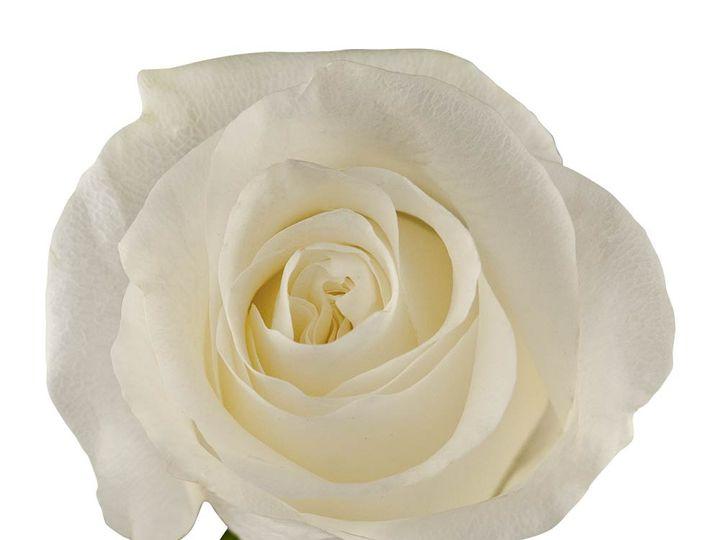 Tmx Foto Proud Rose 1 51 932572 Fort Lauderdale, FL wedding florist