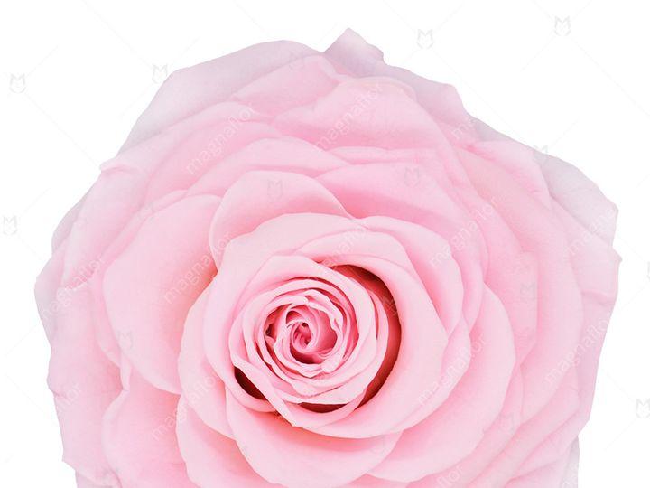 Tmx Light Pink Sweet Sensation 51 932572 Fort Lauderdale, FL wedding florist