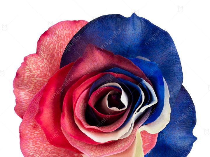 Tmx Mars Rose 1 51 932572 Fort Lauderdale, FL wedding florist