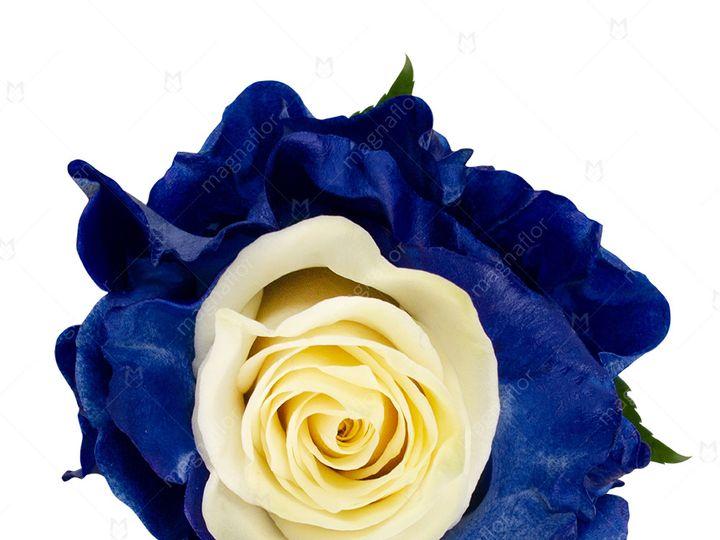 Tmx Mercury Rose 1 51 932572 Fort Lauderdale, FL wedding florist