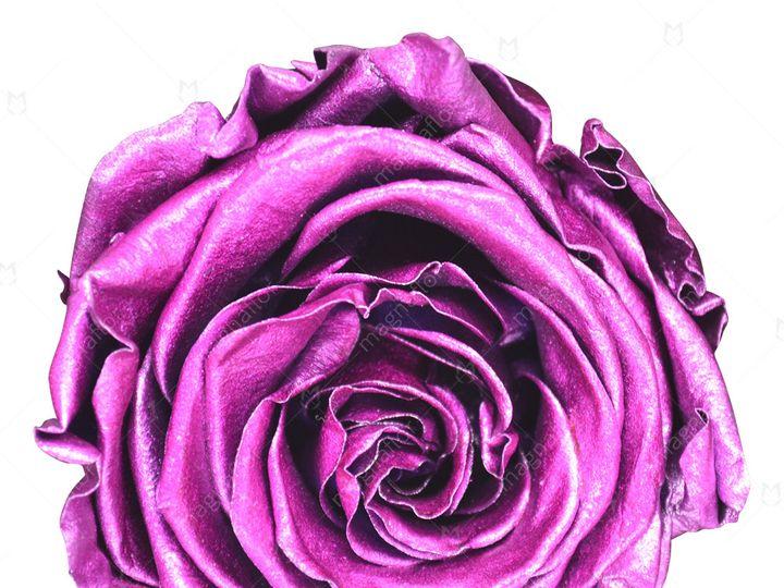 Tmx Metallic Fuchsia Premium Class 51 932572 Fort Lauderdale, FL wedding florist