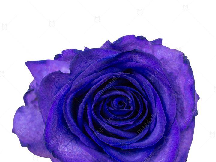 Tmx Meteorid Rose 1 51 932572 Fort Lauderdale, FL wedding florist