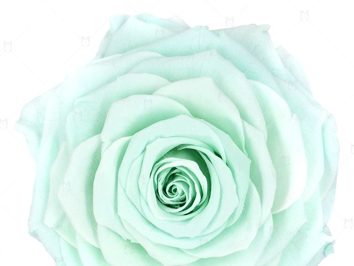Tmx Mint Sweet Sensation 51 932572 Fort Lauderdale, FL wedding florist