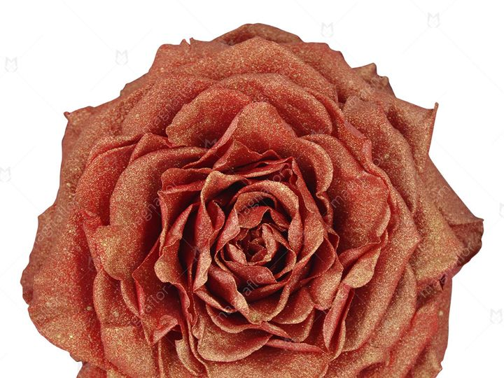 Tmx Orange Glitter Premium Class 51 932572 Fort Lauderdale, FL wedding florist