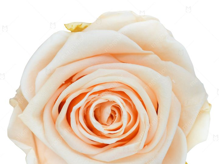 Tmx Peach Perfection 51 932572 Fort Lauderdale, FL wedding florist