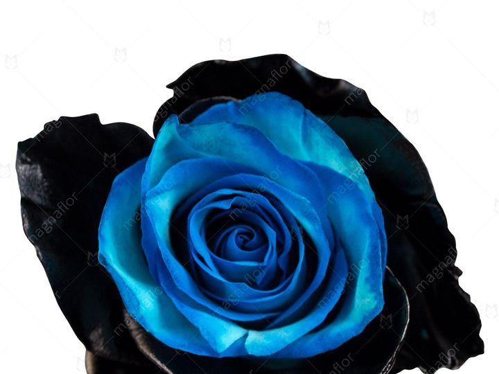 Tmx Pluto Rose 1 51 932572 Fort Lauderdale, FL wedding florist
