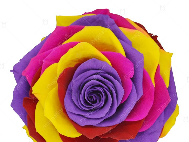 Tmx Pure Passion 2 51 932572 Fort Lauderdale, FL wedding florist