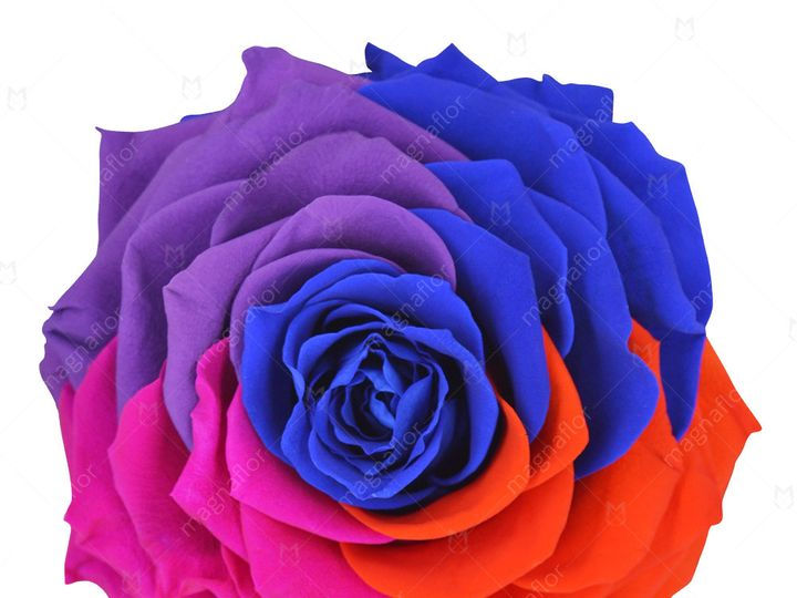Tmx Pure Passion 3 51 932572 Fort Lauderdale, FL wedding florist