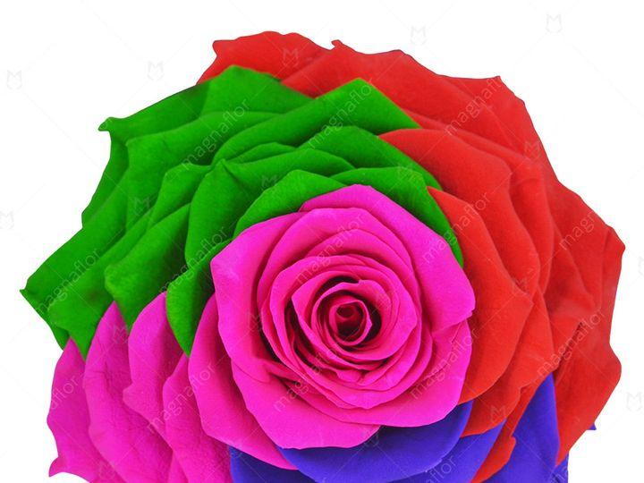 Tmx Pure Passion 5 51 932572 Fort Lauderdale, FL wedding florist