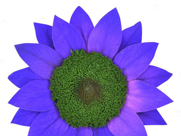 Tmx Purple Sunflower 51 932572 Fort Lauderdale, FL wedding florist