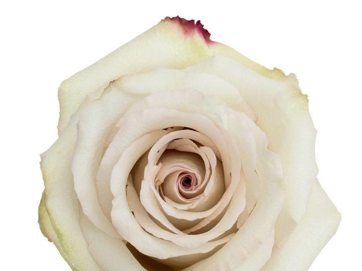 Tmx Quicksand Rose Top 51 932572 Fort Lauderdale, FL wedding florist