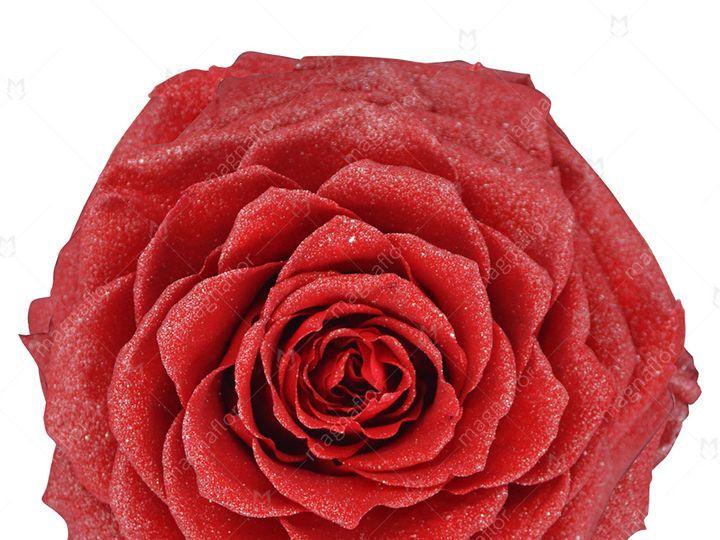 Tmx Red Glitter Premium Class 51 932572 Fort Lauderdale, FL wedding florist