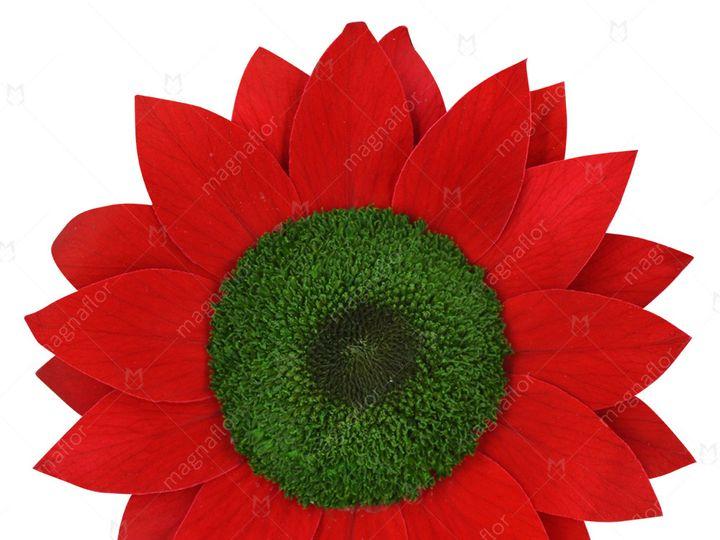 Tmx Red Sunflower 51 932572 Fort Lauderdale, FL wedding florist