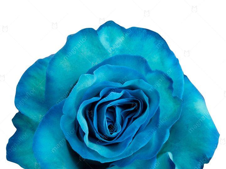 Tmx Rose Uranus 1 51 932572 Fort Lauderdale, FL wedding florist