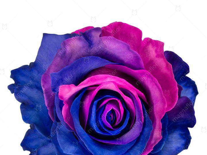 Tmx Saturn Rose 1 51 932572 Fort Lauderdale, FL wedding florist