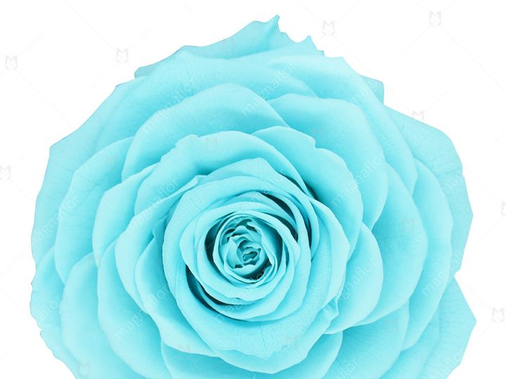 Tmx Sky Blue Sweet Sensation 51 932572 Fort Lauderdale, FL wedding florist