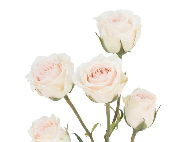 Tmx Spray Rose White 51 932572 Fort Lauderdale, FL wedding florist