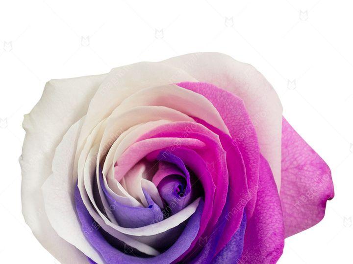 Tmx Sun Rose 1 51 932572 Fort Lauderdale, FL wedding florist