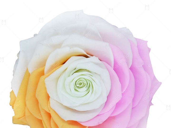 Tmx Sweet Sensation 1 51 932572 Fort Lauderdale, FL wedding florist