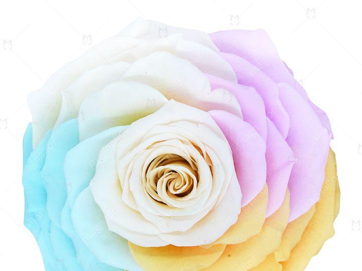 Tmx Sweet Sensation 2 51 932572 Fort Lauderdale, FL wedding florist