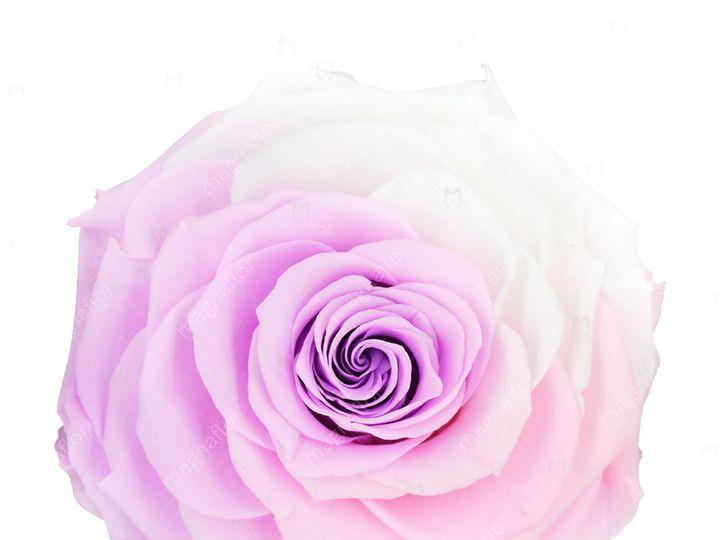 Tmx Sweet Sensation 3 51 932572 Fort Lauderdale, FL wedding florist